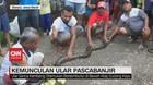 VIDEO: Warga Temukan Ular Sanca di Perumahan Pascabanjir