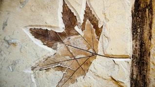 Fosil Hutan Tertua di Dunia Ditemukan di New York