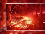 Hutan Australia Darurat Kebakaran, Ini Langkah Morrison