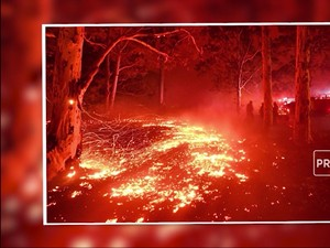 Potret Kebakaran Hutan yang Menerpa Australia