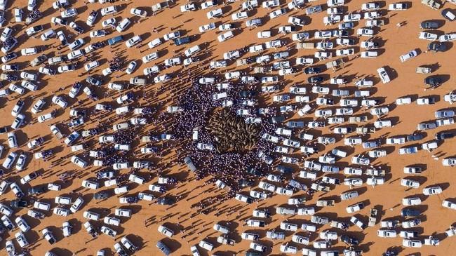 Kerumunan orang dan mobil mengelilingi unta-unta yang dijual di Festival Unta King Abdulaziz yang digelar tahunan di Rumah, 160 kilometer di timur Riyadh. (Photo by Faisal AL-NASSER / AFP)