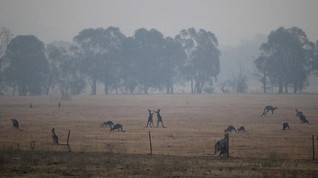Pengusaha Tambang Sumbang Rp672 M untuk Kebakaran Australia