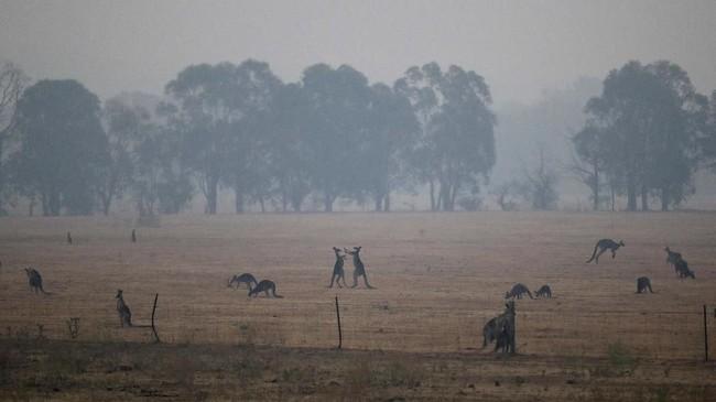 Sekitar 12 dari 28 cagar alam warisan dunia di New South Wales telah terdampak kebakaran hutan.(AP Photo/Mark Baker)