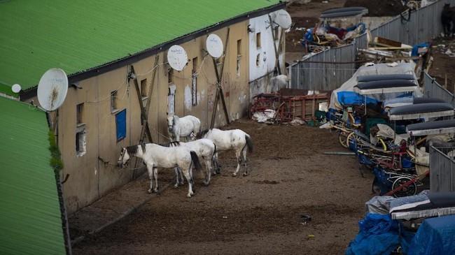 Kuda-kuda diistirahatkan sebelum kembali melayakani turis yang ingin berkunjung ke pulau Princes. (Photo by Yasin AKGUL / AFP)