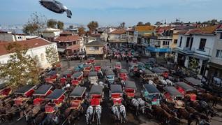 FOTO: Kereta Kuda di Turki Diambang Kematian