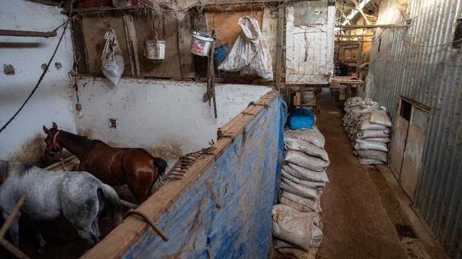 Kuda-kuda peliharaan hidup dalam kandang yang didesain seadannya. (Photo by Yasin AKGUL / AFP)