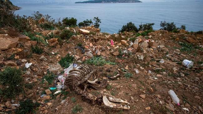 Sisa-sisa tulang-belulang kuda ditemukan di pulau Buyukada, Istanbul. (Photo by Yasin AKGUL / AFP)