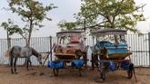 Perlakuan semena-mena kuda oleh pemiliknya menarik perhatian aktivis. Para aktivitas menilai ini bisnis penyiksaan terhadap hewan. (Photo by Yasin AKGUL / AFP)