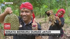VIDEO: Wisata Berburu Durian Jatuh