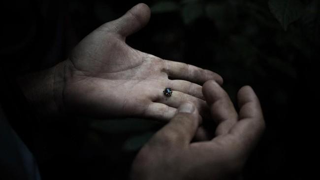 Ahli entomologi memeriksa coleoptera (kumbang) di hutan Lobaye, dekat Mogoumba. (Photo by FLORENT VERGNES / AFP)