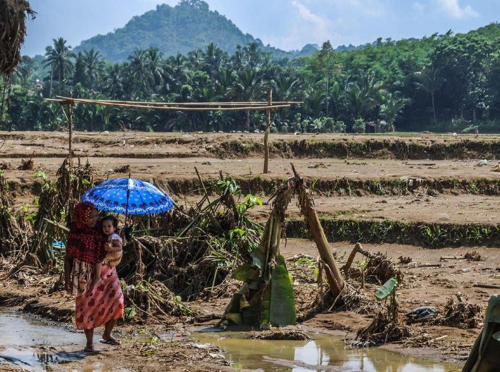 Dinas Pertanian dan Perkebunan (Distanbun) Kabupaten Lebak mencatat 891 hektare areal persawahan di enam kecamatan rusak dan dipenuhi endapan lumpur akibat diterjang banjir bandang pada hari Rabu (1/1) lalu.