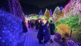 Festival cahaya Garden of Morning Calm berlangsung dari musim dingin hingga musim semi setiap tahunnya. (AFP/Ed Jones)