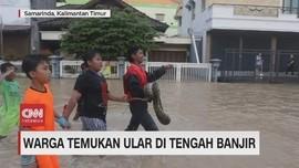 VIDEO: Warga Temukan Ular Piton Ditengah Banjir