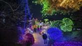 Setiap musim dingin, Korea Selatan menggelar festival cahayadi Taman Garden of Morning Calm. (AFP/Ed Jones)