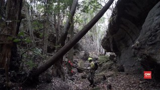 VIDEO: Penyelamatan Pohon Purba dari Kebakaran Australia
