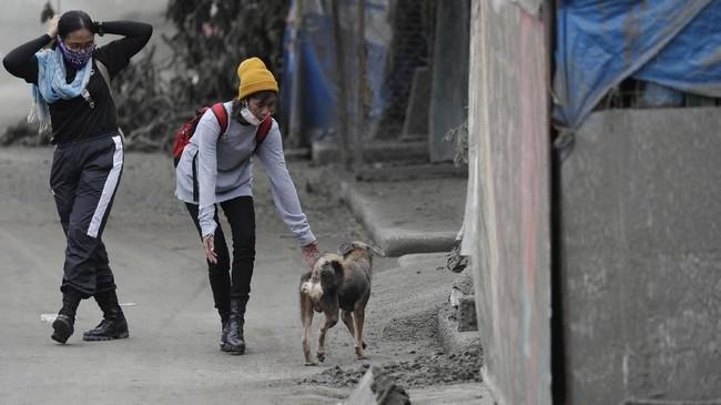 Sukarelawan penyelamat hewan membantu evakuasi hewan peliharaan yang ditinggal mengungsi akibat erupsi gunung Taal di Talisay, provinsi Batangas. (AP Photo/Aaron Favila)