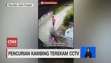 VIDEO: Pencurian Kambing Terekam CCTV