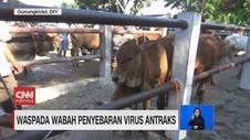 VIDEO: Waspada Wabah Penyebaran Virus Antraks