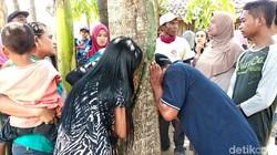 Bukan Pertama Kali di Jember, Pohon 'Menangis' di Pekalogan Juga Bikin Heboh
