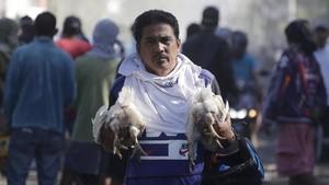 FOTO: Upaya Evakuasi Hewan Peliharaan dari Amuk Gunung Taal