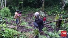 Polres Pagar Alam Bongkar 3 Hektare Ladang Ganja