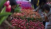 Setiap orang hanya boleh memetik 20 tangkai bunga. Para petani Tulip membantu pengunjung membuat karangan bunga yang cantik. (AP Photo/Peter Dejong)