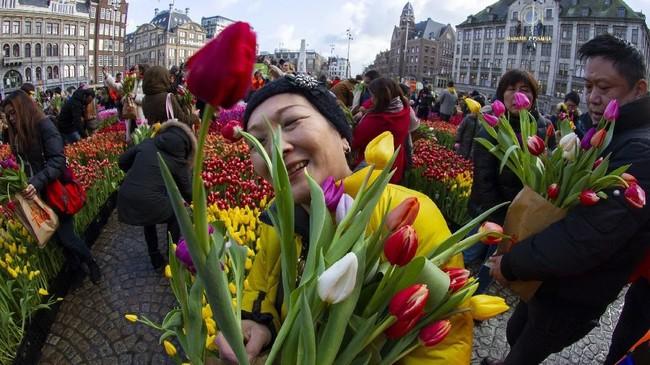 Hari Tulip Nasional menandai pembukaan musim Bunga Tulip untuk industri bunga Belanda. (AP Photo/Peter Dejong)