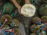 Durian & Nangka Bisa Buat Charger Ponsel & Mobil Listrik?