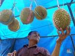 Yummy! Begini Penampakan Durian Enak Asli Rumpin Bogor