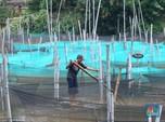 Cakep nih! Intip Desa Penghasil Ikan Hias Terbesar di Jabar