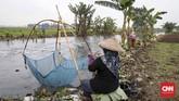 Warga menggunakan anco (perangkap ikan) untuk menangkap ikan saat air meluap di Kali Doser, Desa Wates, Kecamatan Tambun, Kabupaten Bekasi, Jawa Barat, Selasa (21/1). CNNIndonesia/Safir Makki.