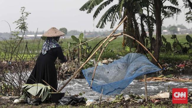 Saat air meluap di musim hujan, Kali Doser dipenuhi ikan betik. CNNIndonesia/Safir Makki.