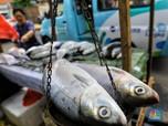 New Normal, Pemerintah Ungkap Strategi di Sektor Perikanan