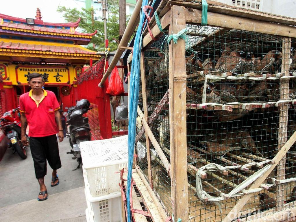 Pedagang Burung Pipit Mulai Gelar Lapak Jelang Imlek