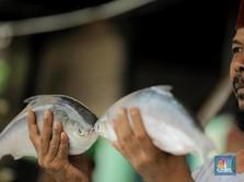 Jangan Kaget! Impor Ikan RI Melonjak, Tapi...