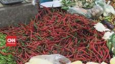 VIDEO: Meroket, Cabe Rawit Tembus Rp.100.000/Kilogram
