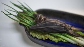 Kelelawar dan Ular Diduga Penyebab Penyebar Virus Corona