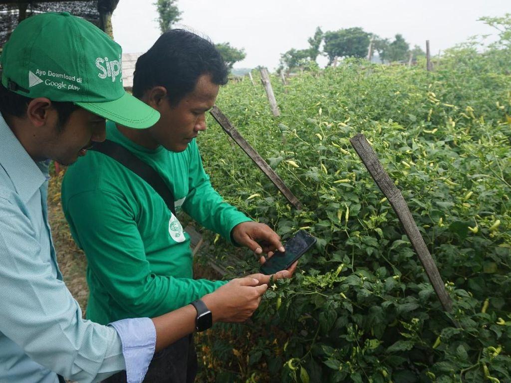 Pemanfaatan Teknologi untuk Pertanian