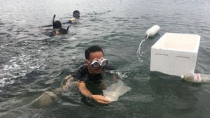 Benih Lobster Rp2,5 M Gagal Diselundupkan ke Singapura