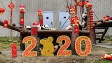 Peruntungan 12 Shio di Tahun Tikus Logam 2020