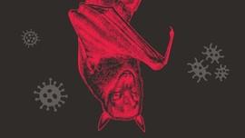 INFOGRAFIS: Menebak Alasan Kelelawar Jadi Penyebar Virus