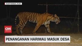 VIDEO: Mencari Penanganan Harimau Masuk Desa