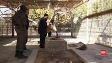 VIDEO: Tak Diberi Makan, Singa di Sudan Kurus Kering