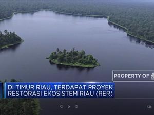 Menilik Program Restorasi Hutan Gambut Terbesar