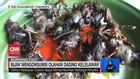 VIDEO: Bijak Mengonsumsi Olahan Daging Kelelawar