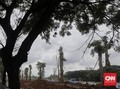 Pemprov: Harga Satu Pohon Pule di Monas Rp8,5 Juta