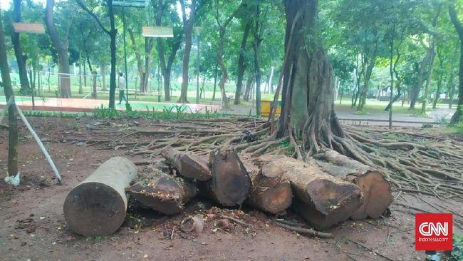 Manfaat Pohon Mahoni Monas yang DKI Anggap Tak Ada Nilainya