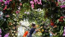 FOTO: London Gelar Pameran Anggrek dari Indonesia