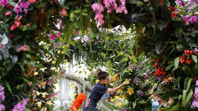 Ini merupakan Orchid Festival London pertama yang bertemakan Indonesia. (AP Photo/Frank Augstein)