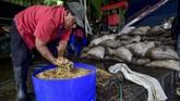 Kenikmatan kopi ini menarik perhatian penikmat kopi dari berbagai belahan dunia, terutama Korea Selatan. (Luis ACOSTA/AFP)
